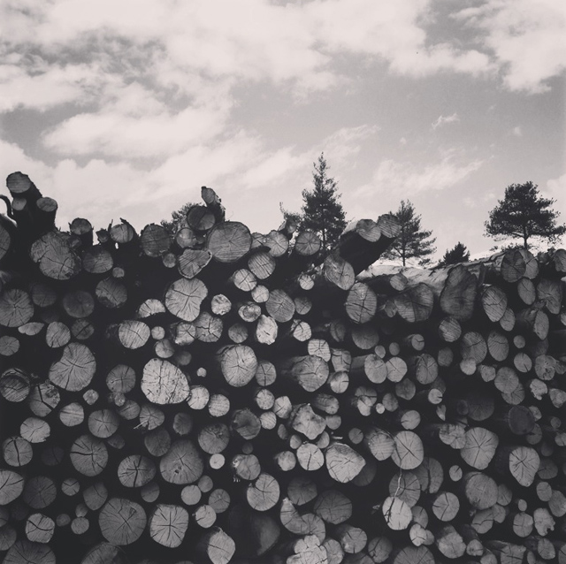 Cider-with-Rosie-stacked-logs