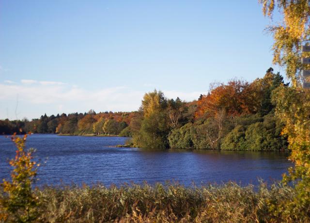 Autumn-leaves-and-lake