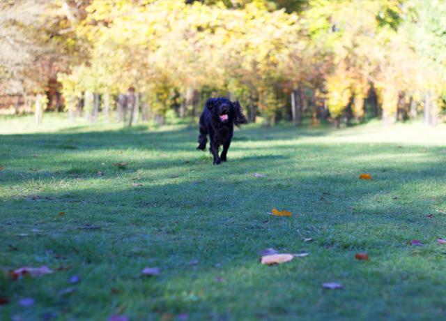 Cider-with-Rosie-Teddy-running