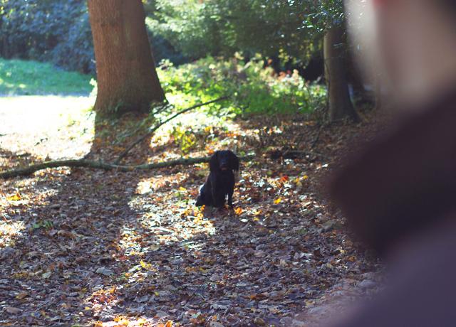 Teddy-amongst-the-leaves