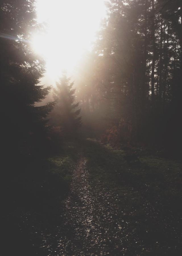 Fog-and-Pine