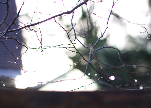 Raindrops-on-branches