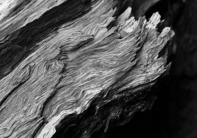 Black-and-white-tree-grain
