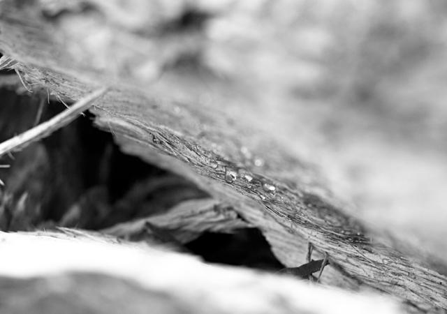 Sap-inside-pine