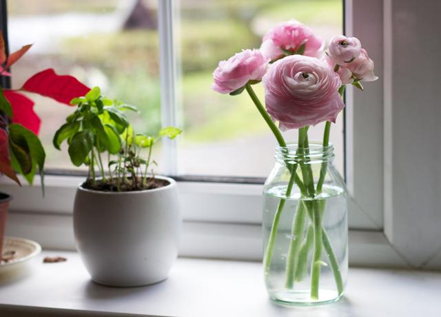 Windowledge-flowers