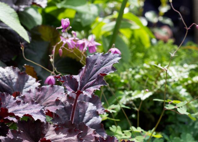 Petersham-nursary-horticulture