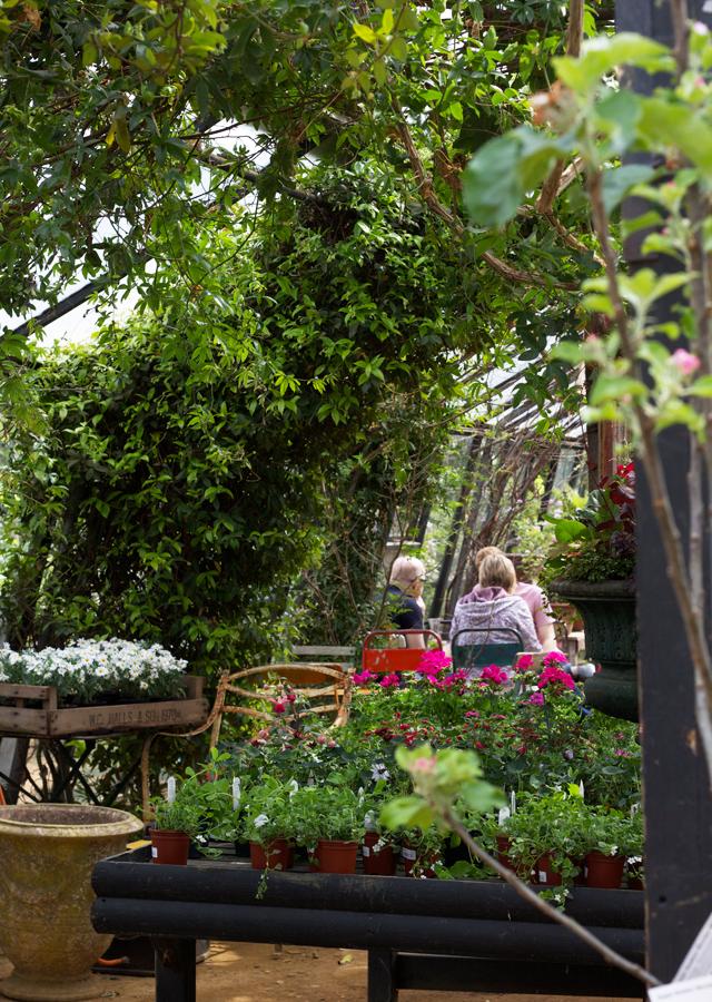Petersham-nursery-conservatory