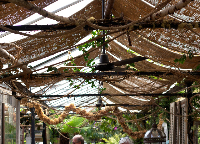 Vine-covered-roof