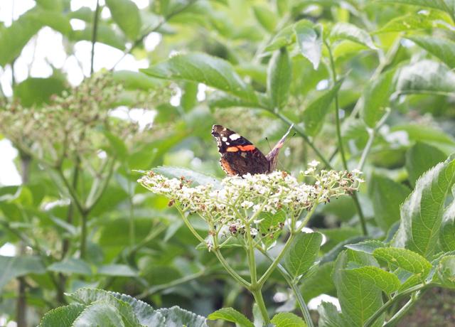 Boden-butterfly-walk
