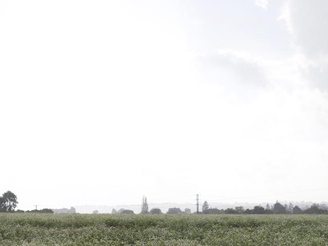 Misty-country-field