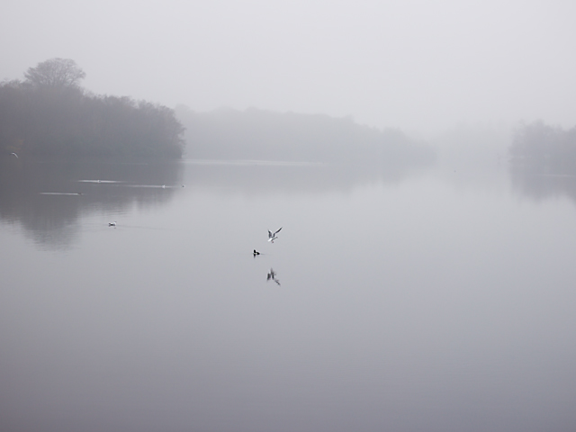 Misty-lake-seagull-by-Cider-with-Rosie