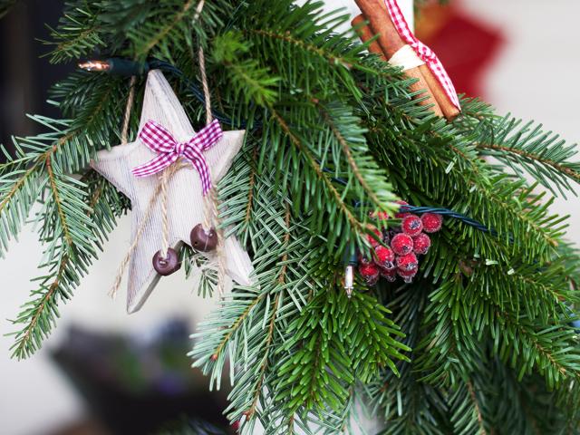 Christmas-fir