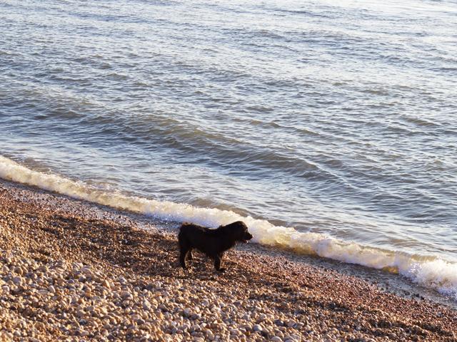 Teddy-on-the-beach