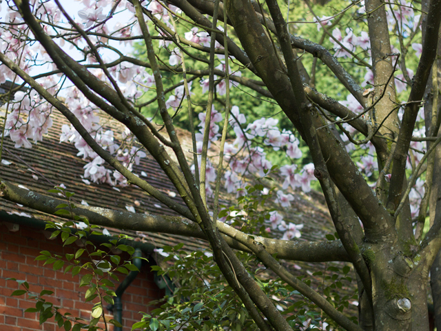 Magnolia-CiderwithRosie