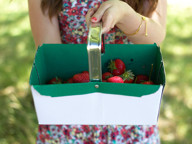 Berry-picking-Summer