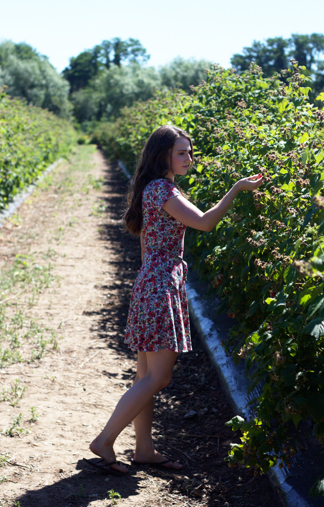 CiderwithRosie-berry-picking-summer