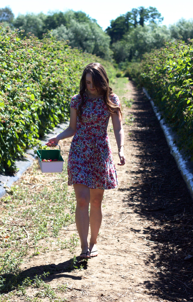 CiderwithRosie-berry-picking-summer3