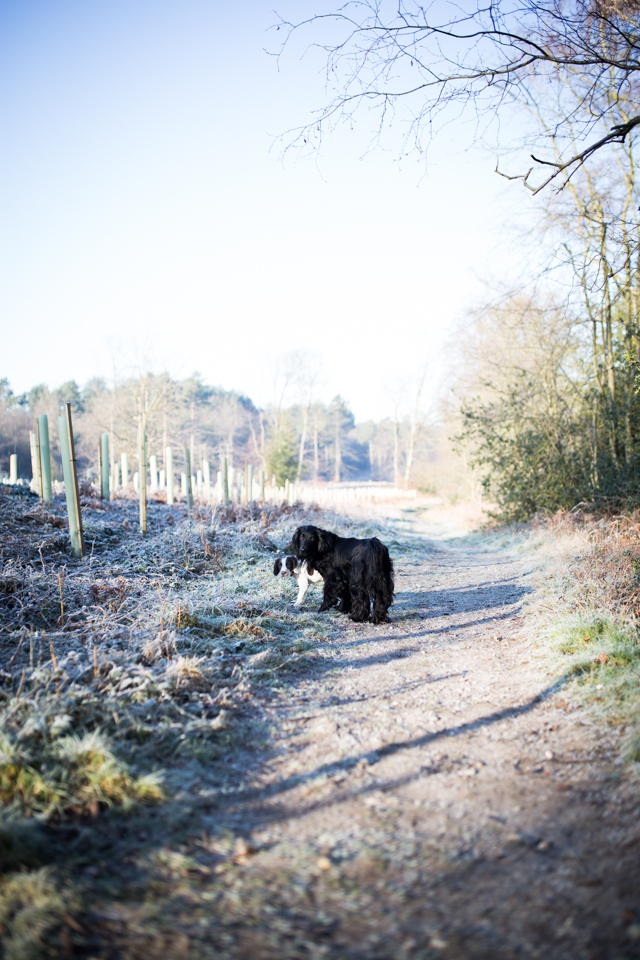 Cider-with-Rosie-frosty-dog-walk-11
