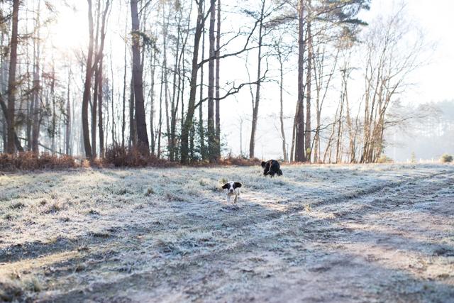 Cider-with-Rosie-frosty-dog-walk-9