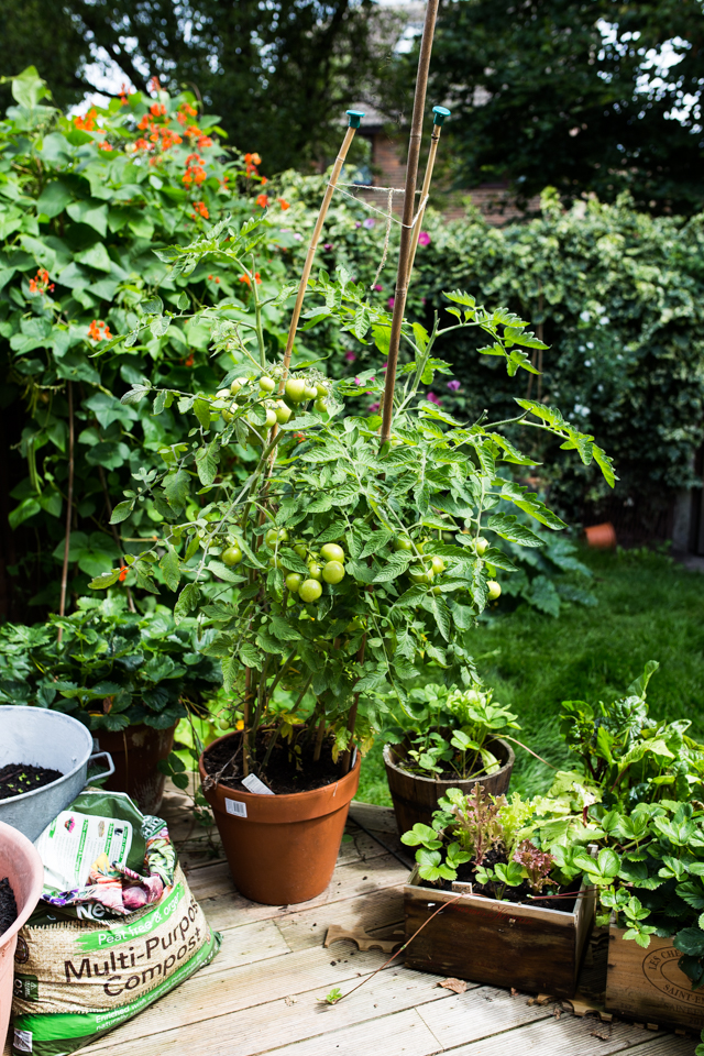 Cider-with-Rosie-kitchen-garden-8